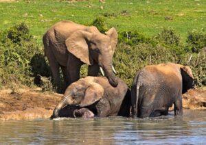 Ellies at Addo Elephant Park - Things You Should Do In Port Elizabeth